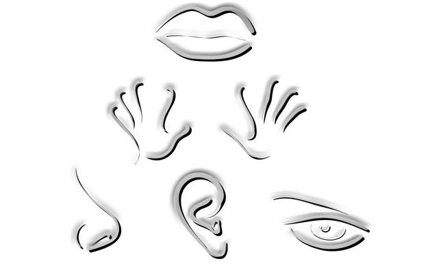 5 Sens Cognitifs